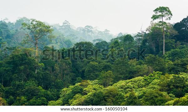 forêt tropicale humide, Parc national de Khao Yai Thaïlande