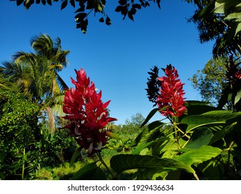 tropical red flower in the dominican Republic
