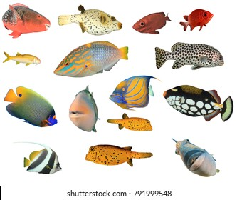 Tropical Reef fish of Indian and Pacific Oceans isolated on white background
