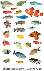 Tropical reef fish isolated on white background. Fish of Indian and Pacific Oceans. Cutouts of fish collection
