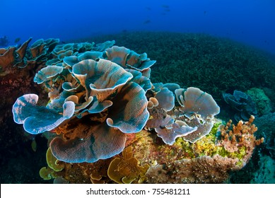 Tropical Reef seascape with Hard Corals, Losin, Thailand
