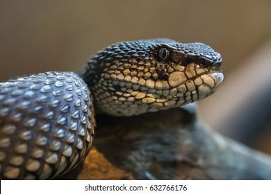 Tropical reptile snake iguana animals in natural habitat enclosure zoological gardens fauna