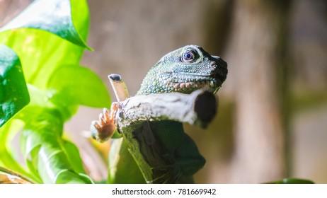 tropical reptile in terrarium
