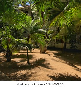 Tropical resort grounds with palm trees and some partial cottages