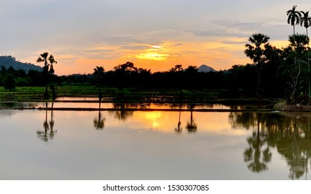 Tropical rice field with palms in the sun raise sun and cloudy sky, silhouette of sugar palm trees when sun set