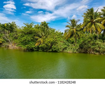 Tropical river with palm trees