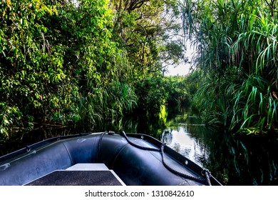 Tropical river in Tanjung Puting National park, zodiak expedition,  Jungle background, Kalimantan, Indonesia