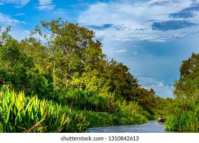 Tropical river in Tanjung Puting National park,  Jungle background, Kalimantan, Indonesia