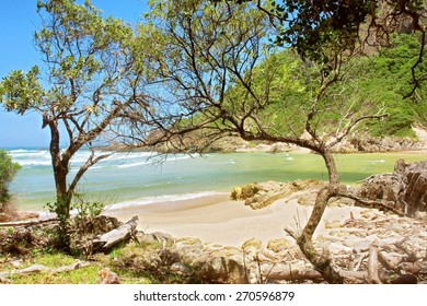 Tropical sand beach behind trees. Shot on the Otter trail in the Tsitsikamma National Park, Garden Route area, Western Cape, South Africa.