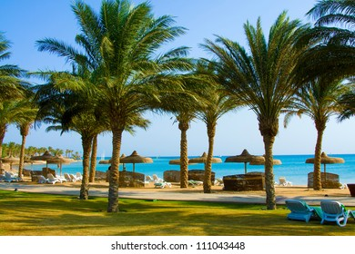Tropical sand Beach with Coconut Palm Trees, chaise-longue, promenade, green grass, blue sea and sky landscape