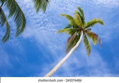 Tropical sand beach with palm tree. Koh Mak, Thailand