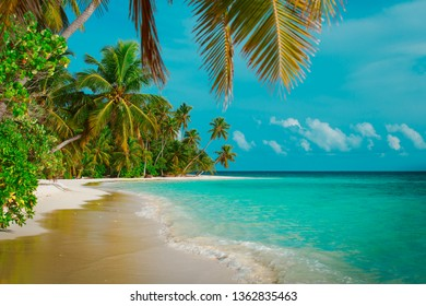 tropical sand beach with palm trees, vacation