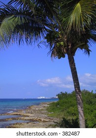 Tropical scene in Cozumel