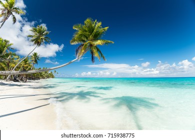 Tropical scenery view on pk9 beach of Fakarava in French Polynesia with perfect white sand, palm trees, palm tree shadow in foreground, ocean with turquoise water and deep blue sky with clouds.