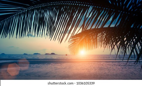Tropical sea beach through palm leaves during amazing Sunset.