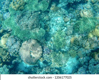 Tropical sea coral reef landscape in turquoise water. Coral reef underwater photo. Tropical sea shore snorkeling or diving. Undersea wildlife of coral reef and marine animals. Sea bottom landscape