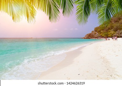 Tropical sea with green water and blue sky with sunlight have green palm leafs on top.