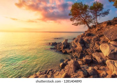 Tropical sea landscape in Costa Brava, Spain. Mediterranean nature at sunset. Tree on rocky cliff on sea coast
