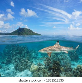 Tropical seascape, island with blacktip reef shark underwater, split view over and under water surface, French Polynesia, Huahine, Pacific ocean, Oceania
