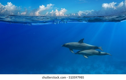 Tropical seascape with water waved surface and dolphin swimming underwater. Image splitted by water line with air bubbles for two parts with clouds and ocean