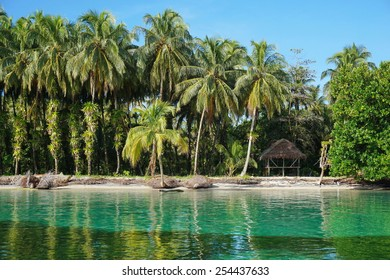Tropical shore with lush coconut trees and a thatched hut, Caribbean, Zapatillas islands, Bocas del Toro, Panama