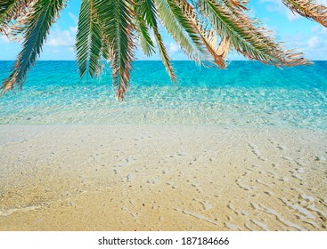 tropical shore under a palm tree