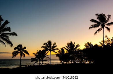 Tropical silhouette of palm trees during sunset on Kauai, Hawaii