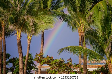 Tropical sky after the rain with raindow above the palm trees.
