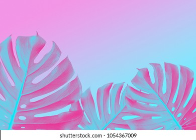 tropical Split Leafs Philodendron plants on ultra violet, pink and blue duotone background, trendy design