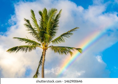 tropical state of mind - Photo of a rainbow and palm tree taken at sunset - sunshine, rainbows, and palm trees swaying in the breeze .. you know you are in Hawaii!