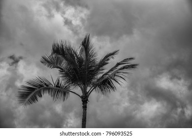 Tropical Storm Clouds Above Waikiki as Trade Winds Whip a Palm Tree.