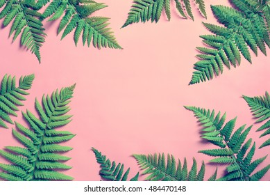 Tropical summer background, fern leaves set in the frame around blank space for a text, flat lay, view from above, stylized photo