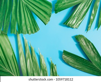 tropical summer flatlay and minimal concept from blank area on center with green palm leaf decoration on blue pastel background with copy space