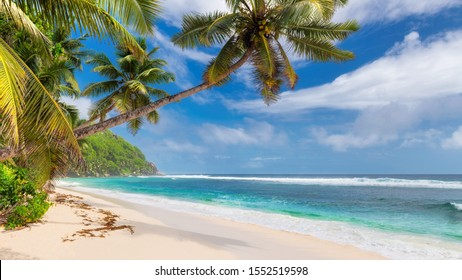 Tropical sunny beach with palm trees and turquoise sea in Caribbean island. Summer vacation and tropical beach concept.