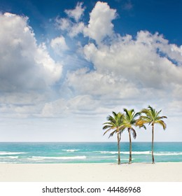 Tropical sunny beach paradise in Miami Florida with palm trees on pristine sands with blue sky and ocean in the background