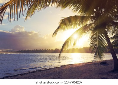 Tropical sunrise with coconut palm trees.