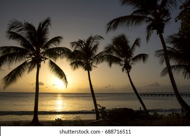 Tropical Sunset. Barbados, in the Caribbean is a typical tropical island full of palm trees and spectacular sunsets.