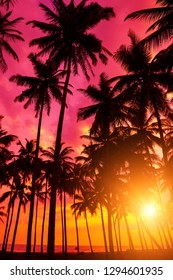Tropical sunset on remote island. Beach sunset with coconut palm trees silhouettes and ocean.