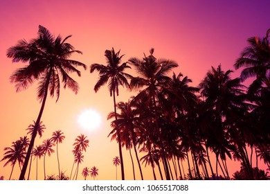 Tropical sunset palm trees
