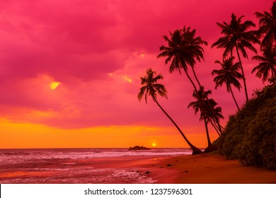 Tropical sunset palm trees silhouettes on beach landscape