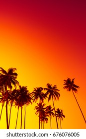 Tropical sunset with palm trees silhouettes and copy space
