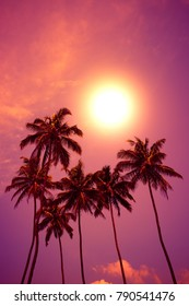 Tropical sunset. Palm trees at vivid beach sunset with colorful sky and shining sun circle.