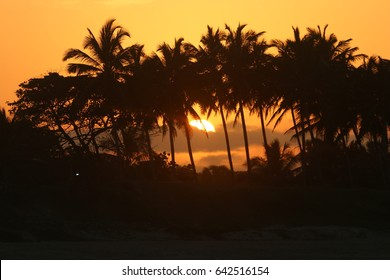 Tropical sunset and palms, Dominican Republic