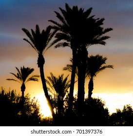 Tropical sunset with silhouette of palm trees