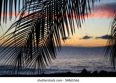 tropical sunset through palm leaves