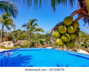 Tropical swimming pool landscape