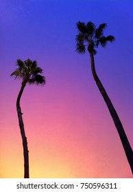 Tropical Tall Palm Trees with Beautiful Sunset Twilight Gradient Yellow to Pink to Purple Sky in the Vacation Background