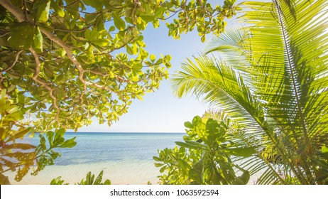 The tropical theme. Exotic nature of Asia. Philippines. Palm trees overlooking the sea.