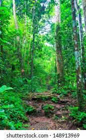 Tropical trail in dense rainforest self-guided trails thailand