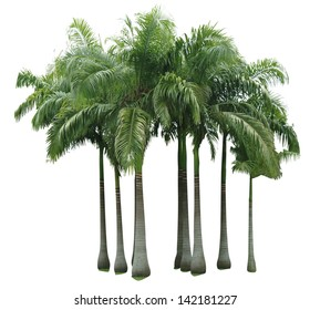 tropical tree isolate